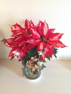 2014-12-03 植物