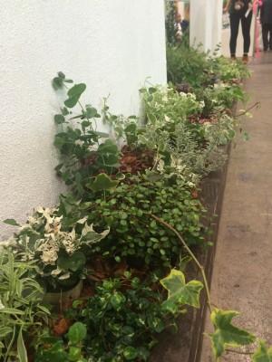 ガーデンEXPO ⑤